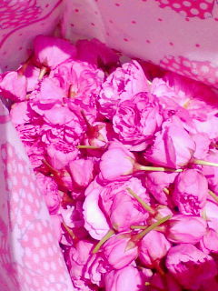 桜の花の塩漬け
