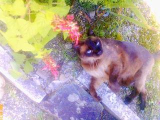 愛猫の旅立ち...<br />  。