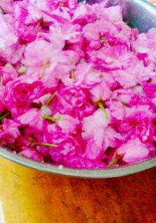 桜の花の塩漬け2012<br />  。